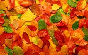 autumn-leaves-desktop-free-on-latoro
